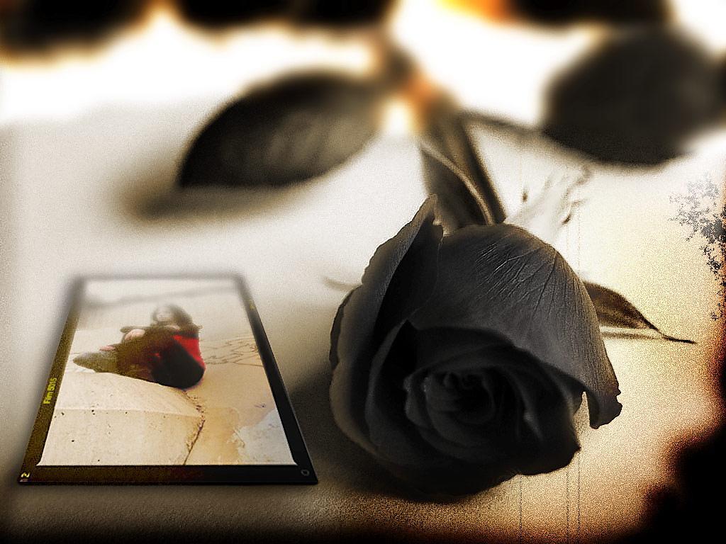 Черная роза 1 1